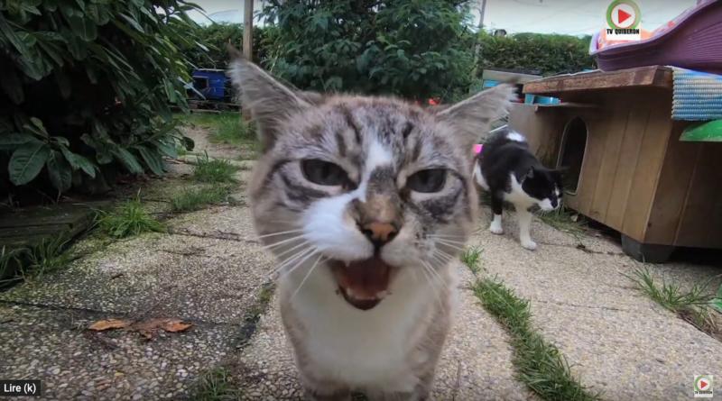 Quiberon: Les Minets de l'Ecole du chat